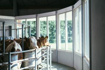 Het Melkproces Boer Johan-20