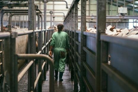 Het Melkproces Boer Johan-27