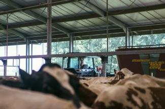 Het Melkproces Boer Johan 44