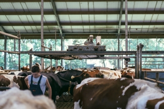 Het Melkproces Boer Johan 6.2